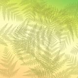 Abstract fern background. Stock Photos