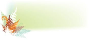 Abstract fern banner. Format with soft green background Royalty Free Stock Image
