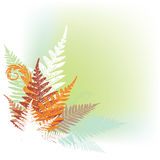 Abstract fern design element. Abstract fern composition with soft green background Stock Photography