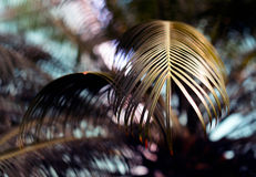 Abstract fern Royalty Free Stock Image