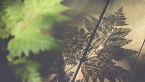 Abstract of fern leafs shadow Royalty Free Stock Photos