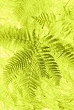 Abstract fern pattern. Abstract green colour pattern created from fern leaves Royalty Free Stock Photos