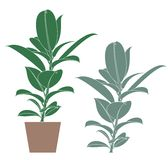 Abstract Ficus. Flower. Vector illustration EPS Royalty Free Stock Photography