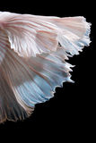 Abstract fine art of moving fish tail of Betta fish Stock Photos