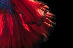 Abstract fine art of moving fish tail of Betta fish