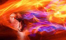 Fire dragon .Fantasy dragon head texture background. Abstract fire background.Fantasy dragon head texture background Royalty Free Stock Image