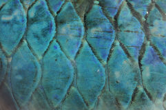 Abstract fish scale background Royalty Free Stock Image