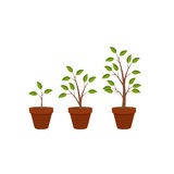 Abstract Flat Nature Plants Growth Graphic Design Background, Ve Royalty Free Stock Images