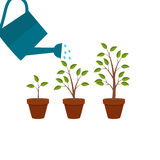 Abstract Flat Nature Plants Growth Graphic Design Background, Ve Stock Photography
