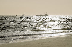 Abstract flock of birds above a beach Royalty Free Stock Photo