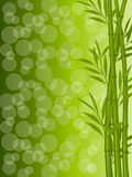 Abstract floral background with a bamboo. Vector illustration Stock Photography