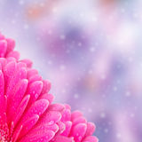 Abstract floral background with bokeh Royalty Free Stock Image