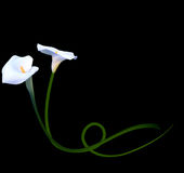 Abstract Floral Background with Calla Flower. Vector Stock Photography