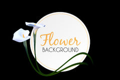 Abstract Floral Background with Calla Flower. Vector Stock Images