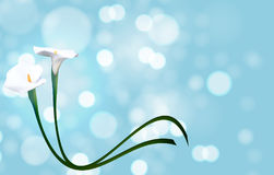 Abstract Floral Background with Calla Flower. Vector Stock Photos
