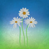Abstract floral background with chamomiles Royalty Free Stock Images