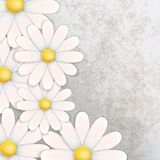 Abstract floral background with chamomiles. On gray Stock Images