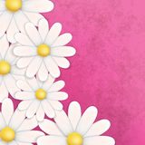 Abstract floral background with chamomiles. On pink vector illustration