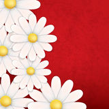 Abstract floral background with chamomiles. On red stock illustration
