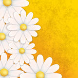 Abstract floral background with chamomiles. On yellow Stock Images