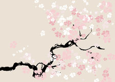 Abstract floral background. cherry blossom. Illustration Stock Photos