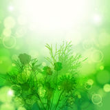 Abstract floral background. Element for design. Stock Image