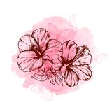 Abstract floral background with hibiscus flowers. Butterflies and pink watercolor texture Royalty Free Illustration