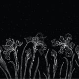 Abstract floral background. Iris. Royalty Free Stock Photo