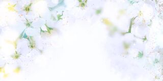 Abstract floral background in pastel soothing tones. Heavily blurred background with bokeh effect. Banner background with space to