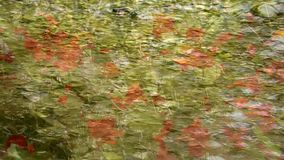 Abstract floral background, shot through the clear  water stock footage