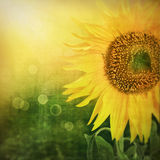 Abstract floral background with sunflower Stock Image