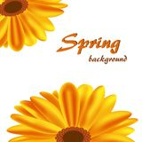 Abstract big orange flowers on a white background royalty free illustration