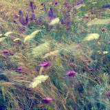 Abstract floral background in vintage style. Wild flowers Stock Photos
