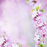 Abstract Floral Blossom Blurred Background with Flowers Royalty Free Stock Photos