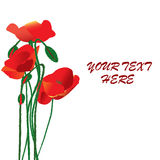 Abstract floral design with red poppies Stock Photos