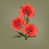 Abstract floral design. Red poppies. Poppy with leaves. royalty free illustration