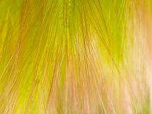 Abstract floral grass textured background Stock Photo