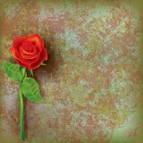 Abstract floral illustration with red rose Royalty Free Stock Images