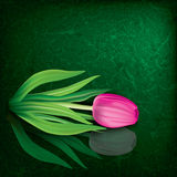Abstract floral illustration with tulip Stock Photos