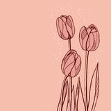 Abstract floral illustration with tulips on pink Stock Image