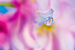 Free Abstract Floral Macro Background With Waterdrop Reflection Stock Photography - 73171202