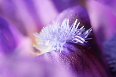 Abstract Floral Macro Detail Stock Photography