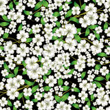 Abstract floral ornament on black Stock Image