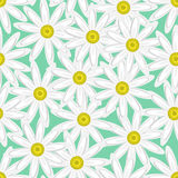 Abstract floral seamless pattern consisting of daisies Royalty Free Stock Photo