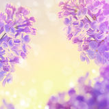Abstract floral spring background flowers lilac Stock Images