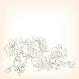Abstract floral vector illustration for design. Stock Image