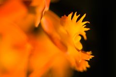 Abstract flower. Ultra shallow depth of field shot of orange flower stock photos