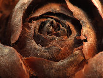 Abstract Flower. Abstract dead flower close up Stock Photo