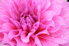 abstract flower Στοκ Εικόνα