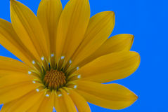 Abstract flower. Flower on blue background Stock Photo